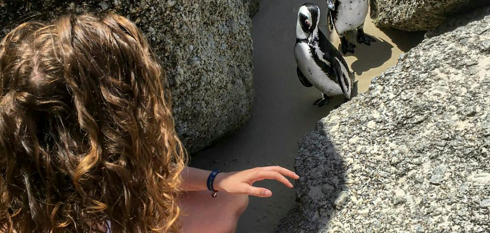 Pinguine am Boulders Beach Simons Town